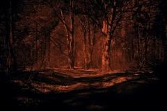 NIR1000-3765-Follow-The-Path