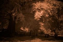 NIR1000-5836 Wedding-Tree