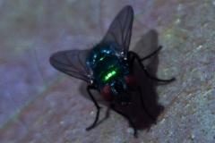NIR1000-8983 Corona Discharge on the Fly