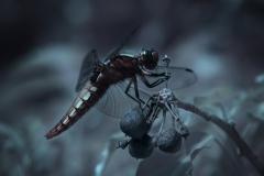 NIR1000-9602 Dragonfly